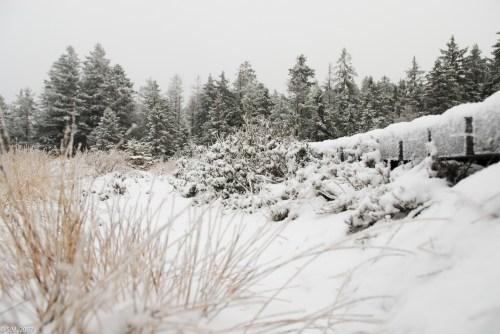 Schnee im Hochmoor (9 von 15)