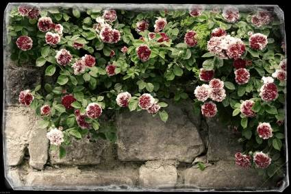 Exposure X4-Preset: Autochrome - Border