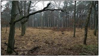 Urwaldstrand0002