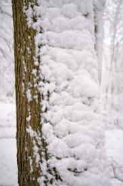 Schnee-Diekholzen_6