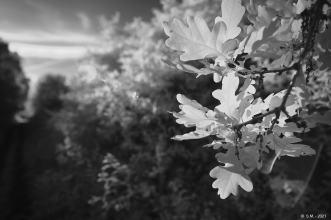 Schwarze Heide - IR _9
