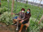 La Junta pone en marcha un proyecto de gestión integrada de plagas en fincas demostrativas para los agricultores