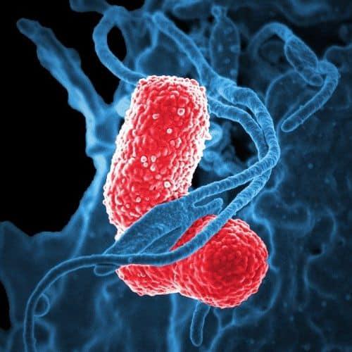 bacteria-811861_640