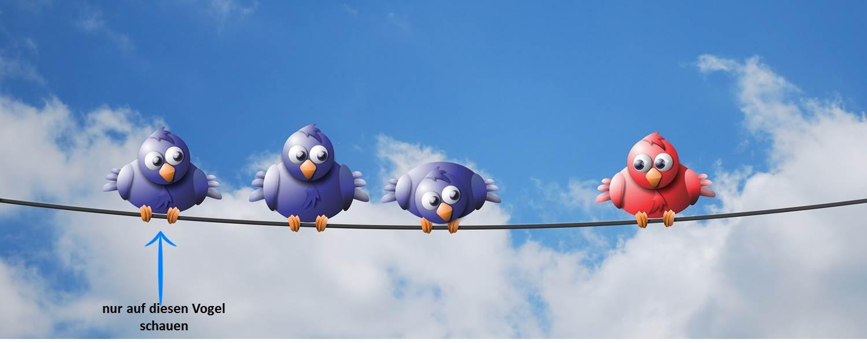 4 Vögel auf einer Leine
