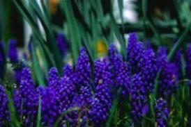 Péče o zahradu duben