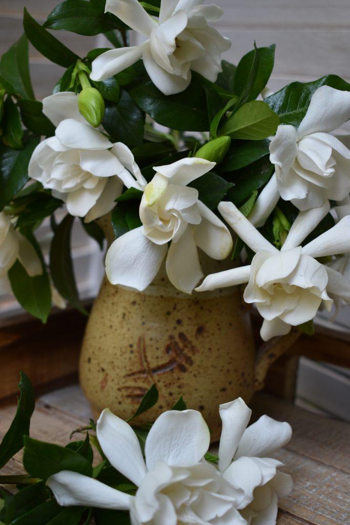 Gardenias Near Me : gardenias, Enjoying, Gardenias, Flowers, Noveltea
