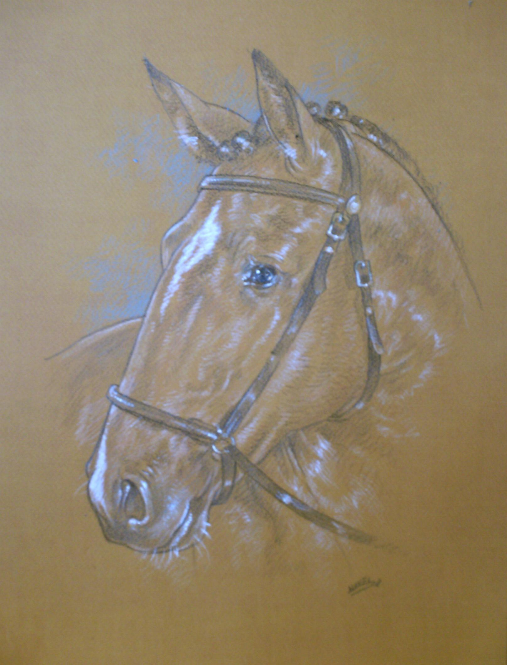 CNovel Dessins Chevaux