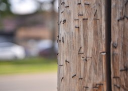 telephone pole staples photo texture photography