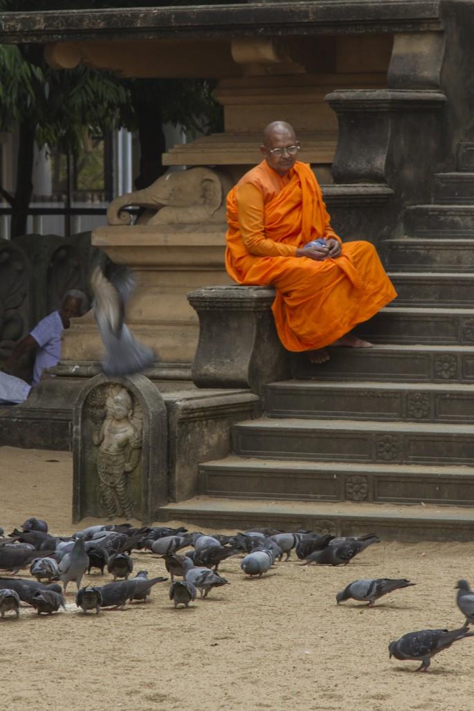 Monk at Kelaniya, near Colombo, Sri Lanka