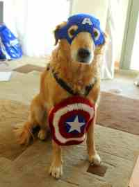 Small And Large Dog Costumes For Every Occasion ...