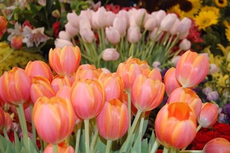 flower fest (3/6)