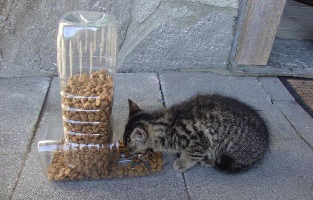 pet-feeder-1
