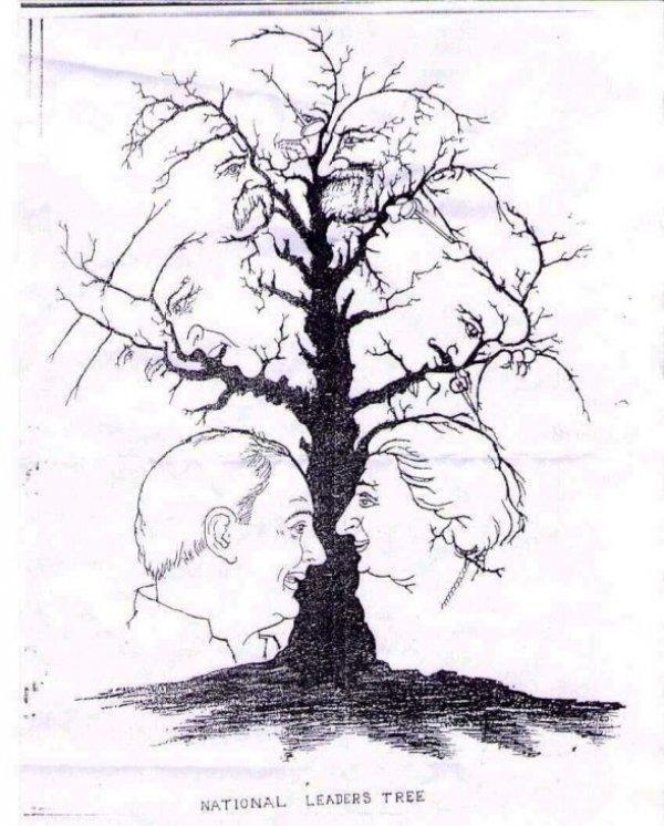 drvo-mozgalica-333