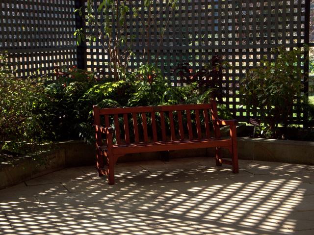 A shady spot to relax, Royal Tasmanian Botanical Gardens