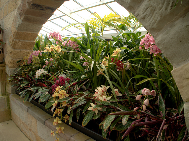 Orchids in the Conservatory, Royal Tasmanian Botanical Gardens