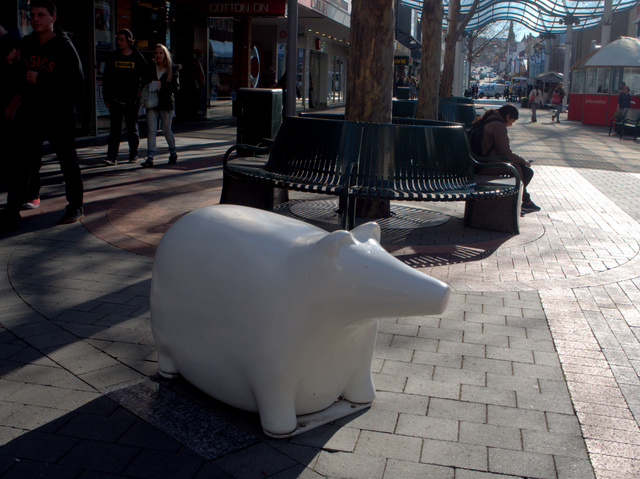 Maurice the Pig, Patrick Hall 1996. Moulded hebel sculpture, located in the Elizabeth Street Mall