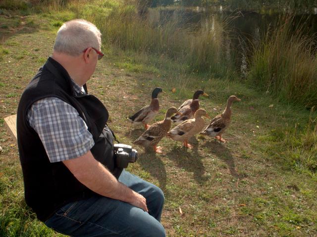 The ducks keep a visitor company