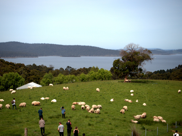 A ewe with a view - Grandewe Cheeses looks out over the d'Entrecasteaux Channel and Bruny Island