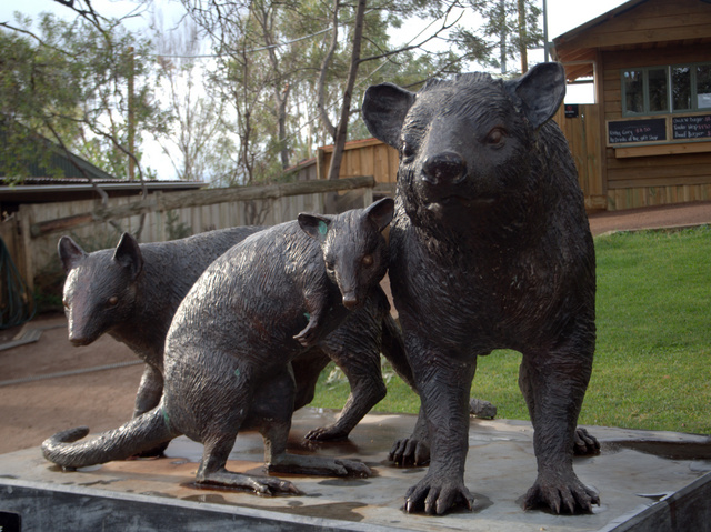Tasmanian marsupials sculpted by Gillie and Marc on display at Bonorong Wildlife Sanctuary