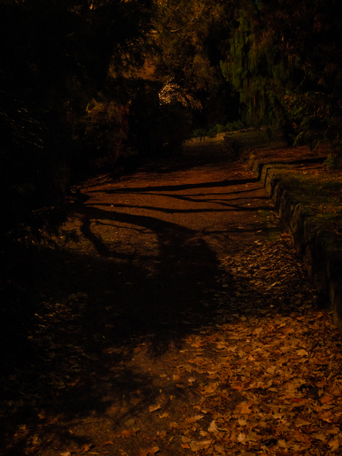 A pathway at the Royal Tasmanian Botanical Gardens is momentarily lit up as part of Tony Oursler's Beyond the Spectrum during Dark Path