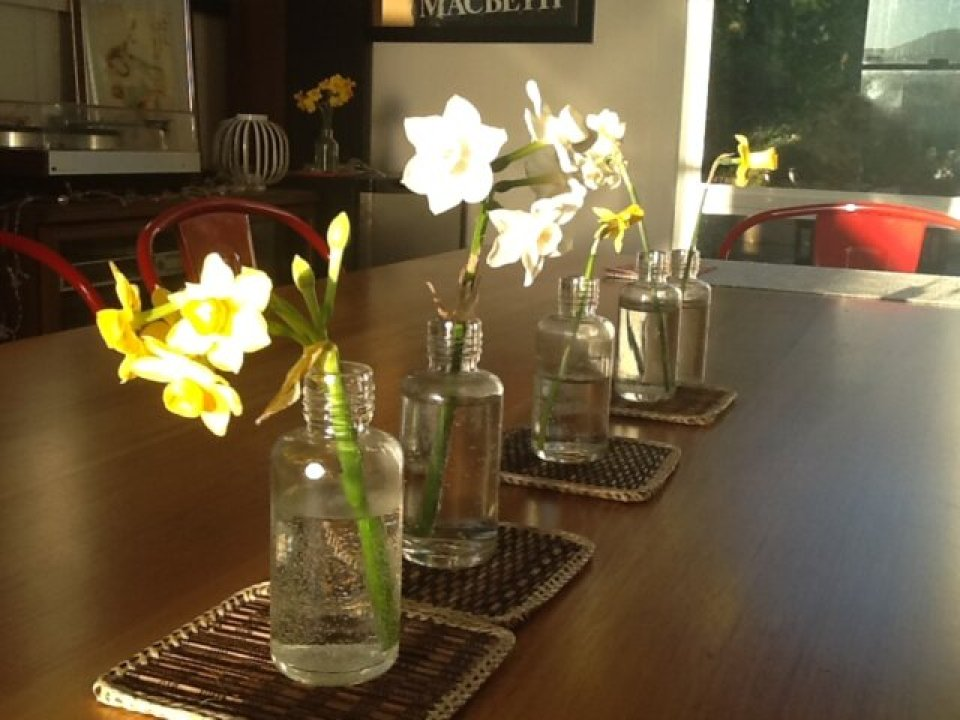 Spring bulbs on the dining table, September 2014