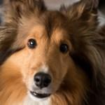 dog-2814754_960_720