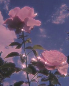 roses source