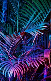 aesthetic laptop purple pink phone dark backgrounds leaves palm colors different screen gorgeous trees bring rainbow