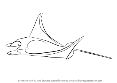 Step by Step How to Draw a Manta Ray : DrawingTutorials101