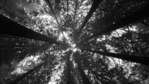 Worm s Eye View Of Trees In The Forest HD Black Aesthetic