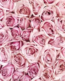 pink rose flowers aesthetic flower roses iphone background pastel backgrounds обои pretty цветочные instagram boutique place lovely cute blush wallpapers