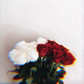 rose aesthetic wallpapers roses iphone flower backgrounds cute shot sunflower ser gusta discover