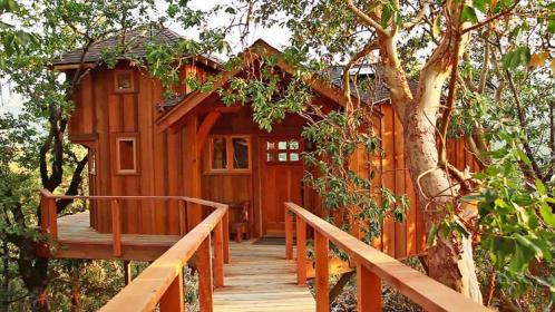 treehouse masters extreme treehouses dream tree childhood houses pete nelson fastco tv animal guy planet homes cool fastcocreate building slide