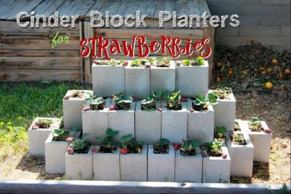 block cinder strawberry planter planters strawberries garden clearwatercottage boxes borders herb