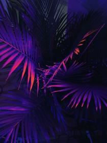 purple neon aesthetic backgrounds tropical iphone cool dark lights flower rose visit