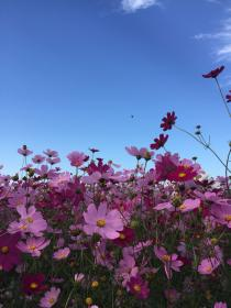 aesthetic flowers flower plant pink summer nature wild plants backgrounds friends
