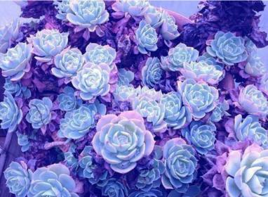 purple aesthetic lavender pastel flowers backgrounds violet periwinkle goth very nice