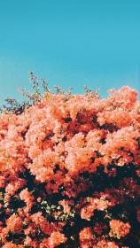aesthetic wallpapers flower backgrounds fondos flowers pantalla parede iphone phone flores collage templates nature coral brilhantes wattpad custom random collages