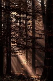 brown aesthetic autumn forest light wallpapers colors whispers landscape nature trees tree digital