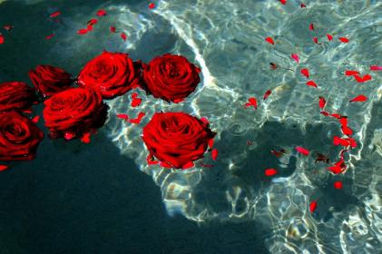 aesthetic roses flowers google landscape wallpapers heart bh