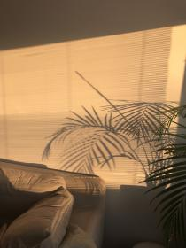 aesthetic brown golden hour chill yellow rooms wallpapers sun light iphone