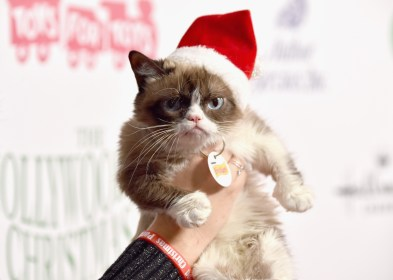 grumpy cats weird getty dogs hollywood parade nrk explained alberto rodriguez verden dead beloved tributes flood seven age memes attends