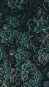 aesthetic dark wallpapers backgrounds wallpaperaccess dianna iphone plant