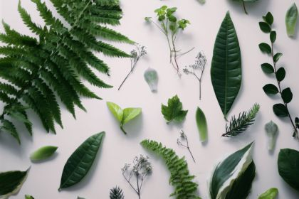 aesthetic plant plants mac nature grunge recycle background backgrounds wallpapers leaves google flower funny planet routine startups could daily help