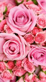 iphone wallpapers plus backgrounds rose roses cool gorgeous background flower phone preppy wallpaperaccess