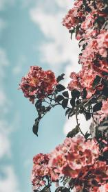 wallpapers aesthetic flower iphone pretty super