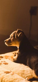 aesthetic wallpapers brown iphone puppy 1125