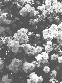 aesthetic roses wallpapers flower cave