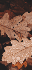 iphone aesthetic brown xs wallpapers unsplash epic leaves max pack fall cave iphonexwallpapers via