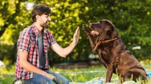 curso entendendo o aprendizado canino o guia definitivo